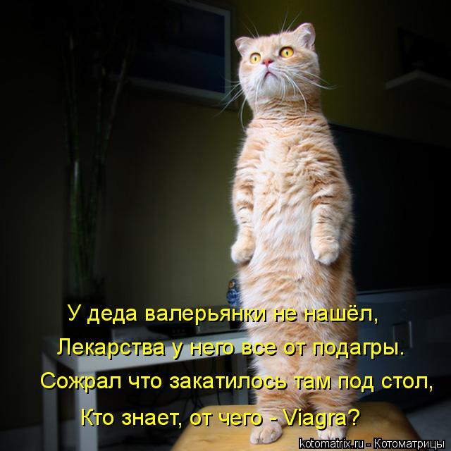 kotomatritsa_k (1) (640x640, 239Kb)