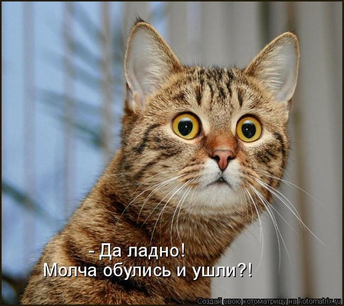 kotomatritsa_Ne (700x623, 396Kb)
