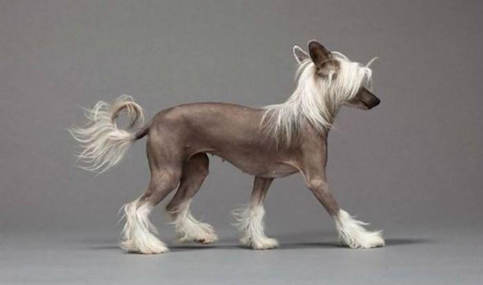Какая порода собаки подходит твоему знаку зодиака?