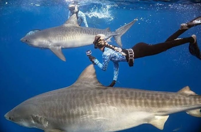 Что едят акулы? Красавица ичудовища