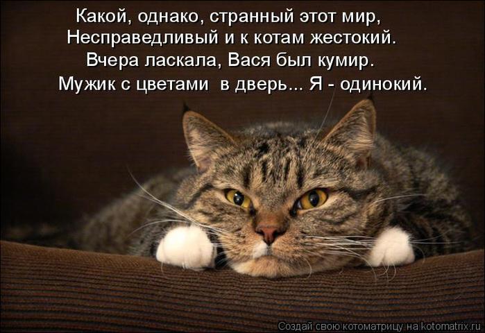kotomatritsa_6H (700x480, 332Kb)