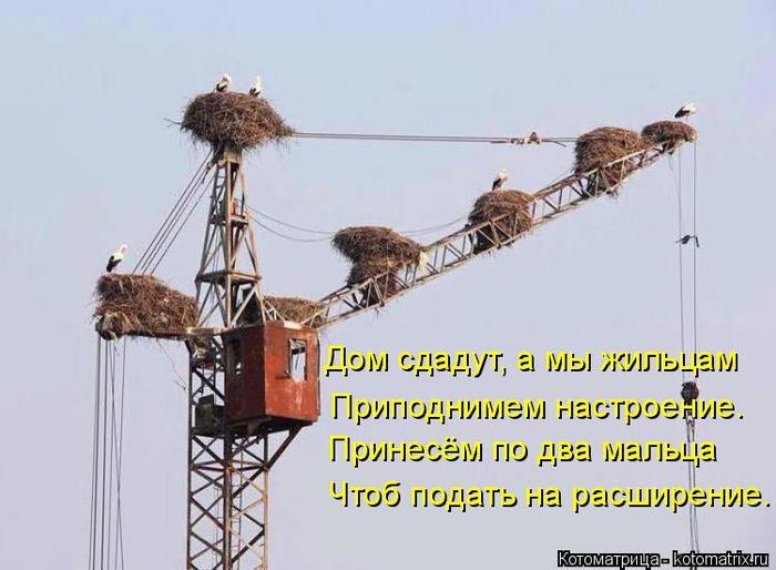kotomatritsa_g (700x514, 261Kb)