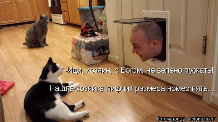 kotomatritsa_u (1) (700x392, 251Kb)
