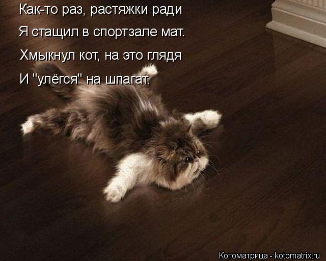 kotomatritsa_a (640x512, 169Kb)