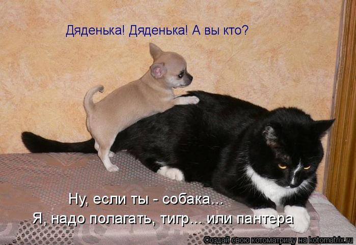 kotomatritsa_Xf (700x482, 335Kb)