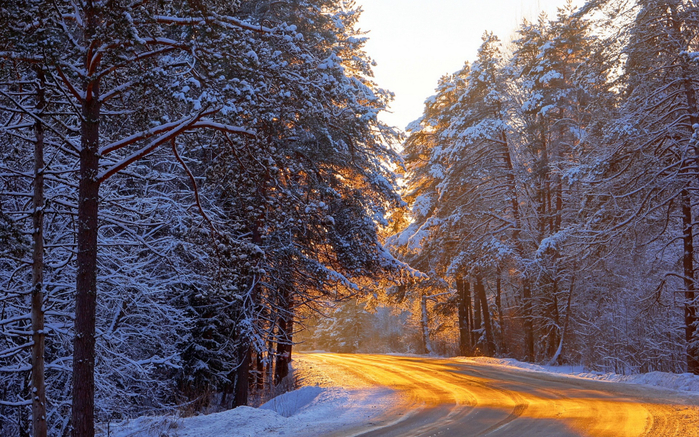 Winter-forest-trees-road-sunlight-snow_1920x1200 (700x437, 548Kb)