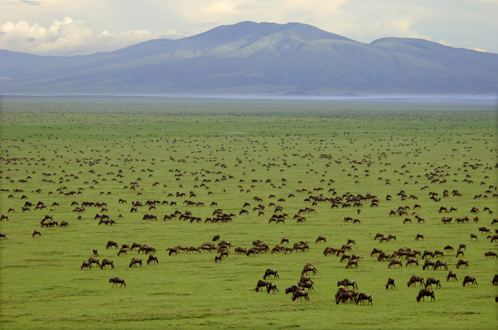 Serengeti-National-Park-Migration-Wito-Africa-Safaris (700x464, 412Kb)