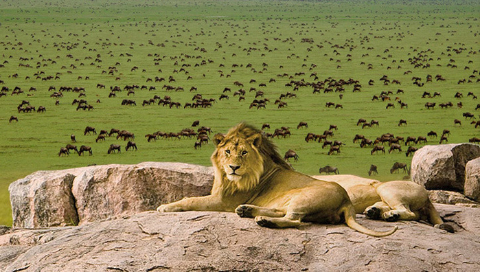 content_tourism_tanzania_serengeti_plains (700x396, 401Kb)