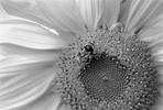 [+] Увеличить - бджол №182