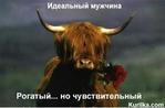 [+] Увеличить - реальный коров №91.