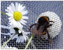 [+] Увеличить - бджол №215