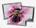 [+] Увеличить - №239. «The Bee in the Flower»