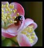 [+] Увеличить - №13. «Ladybird»