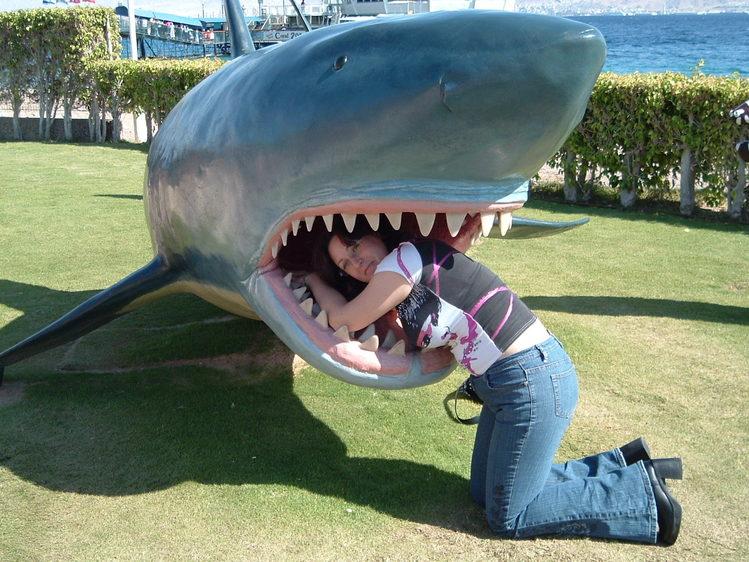 в пасти у акулы!