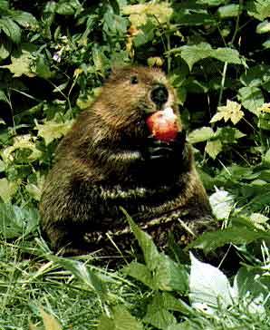 http://img1.liveinternet.ru/images/foto/889948/f_975976.jpg