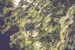 Посмотреть все фотографии серии Мой лес