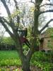[+] Увеличить - я - черная кошка,живущая на дереве;о)
