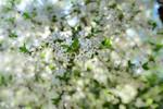 [+] Увеличить - Весна