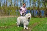 [+] Увеличить - Белка и Магвай. Южнорусская овчарка