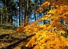 Посмотреть все фотографии серии Поздняя осень