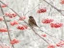 Посмотреть все фотографии серии Проказы матушки Зимы