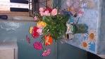 Посмотреть все фотографии серии Растения и Цветы
