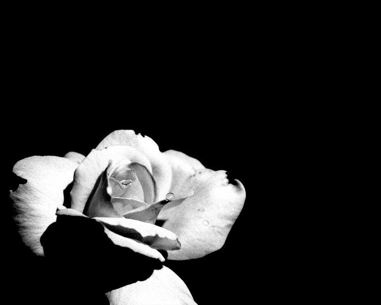 Черно-белая жизнь.  Категории.  Ну очень люблю ч/б фото.
