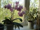 Посмотреть все фотографии серии Цветы в моём доме