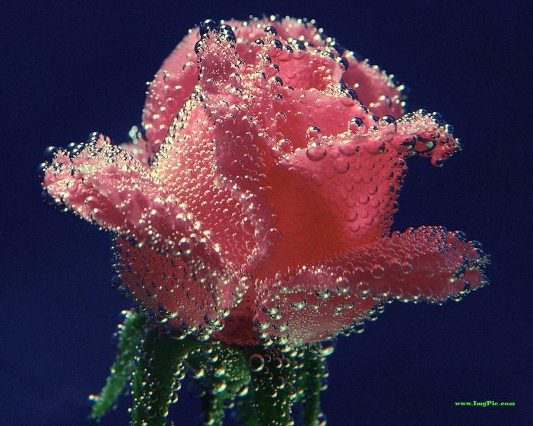 И блестящие картинки цветы