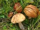 Посмотреть все фотографии серии Фрукты,ягоды,грибы