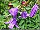 Посмотреть все фотографии серии Цветы лета