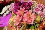 Посмотреть все фотографии серии Букеты,розы,натюрморты,цветы на моем окне