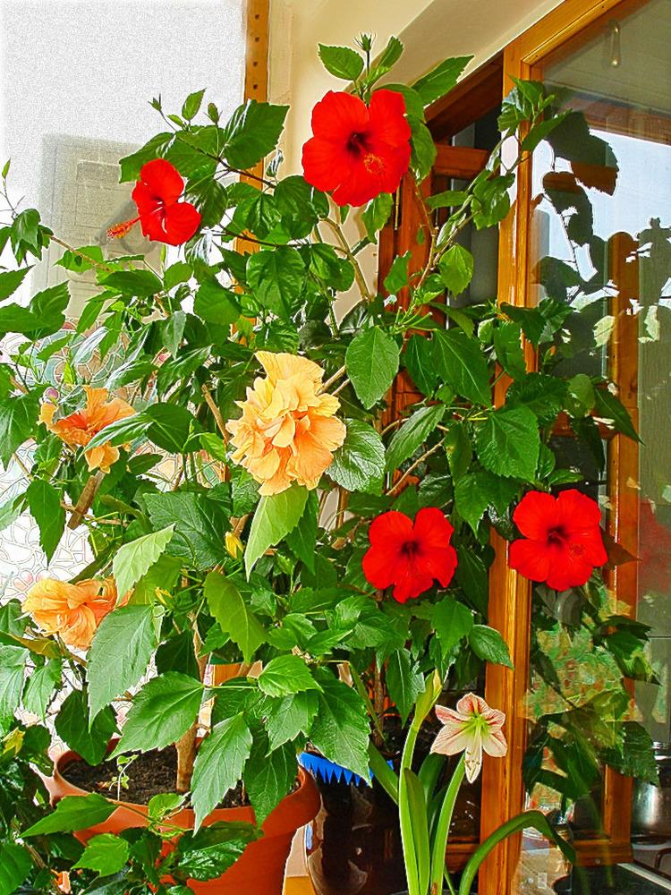 Які квіти посадити на балконі?.
