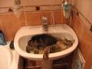 Посмотреть все фотографии серии Кошки, кошки и еще раз - кошки!