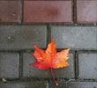���������� ��� ���������� ����� My Fall