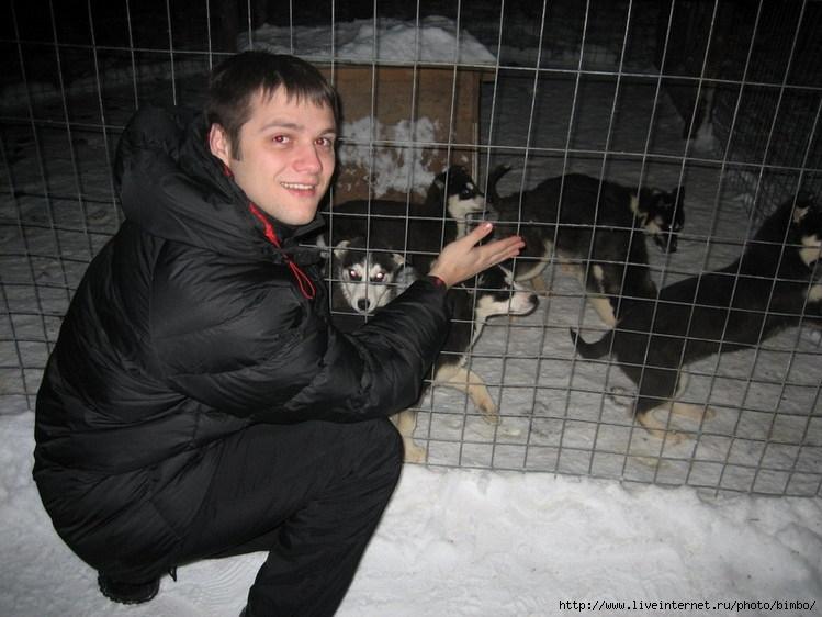 Я и щенки хаски (лайки)