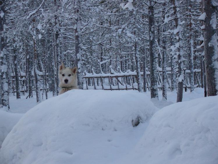 Фотки рыжей феи.)/Rovaniemi.