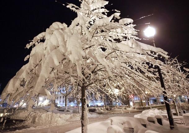 Деревья, покрытые снегом вокруг государственного департамента в Вашингтоне, 6 февраля 2010 года.