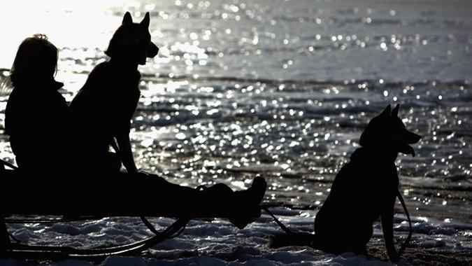 27-ые ежегодные Aviemore Husky на собачьих упряжках рядом с Лох Морлич (Loch Morlich), Шотландия, 21-23 января 2010 года.