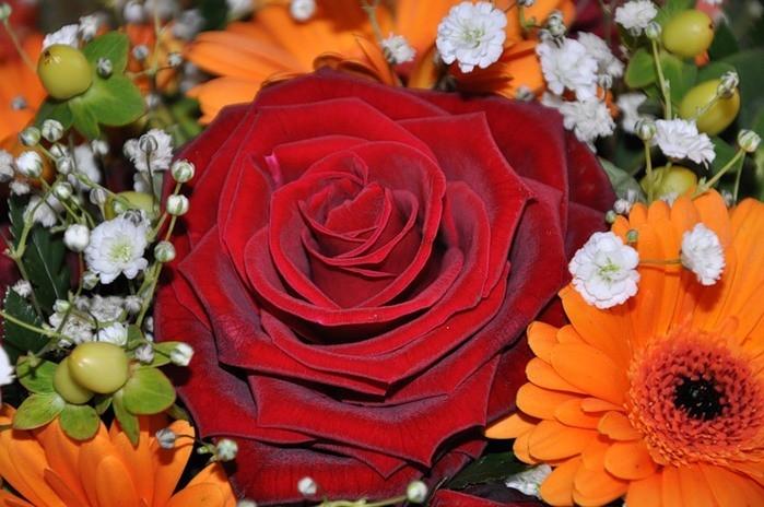 Фото цветов для слайд шоу