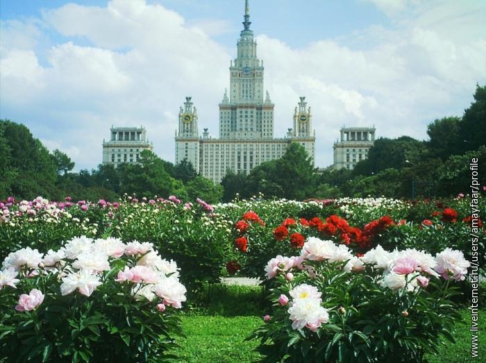 Главное здание МГУ и пионы в Ботаническом саду