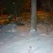 моё деревце в снегу