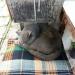 котик Стиви везде мягонько спит
