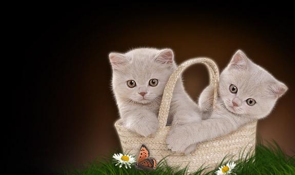 http://img1.liveinternet.ru/images/foto/b/1/501/796501/f_4238620.jpg