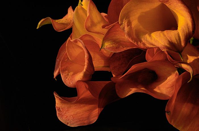 Цветы каллы