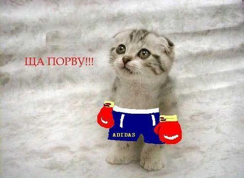 http://img1.liveinternet.ru/images/foto/b/1/639/1040639/f_3737621.jpg