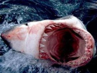 Картинки.  Фотографии акулы.