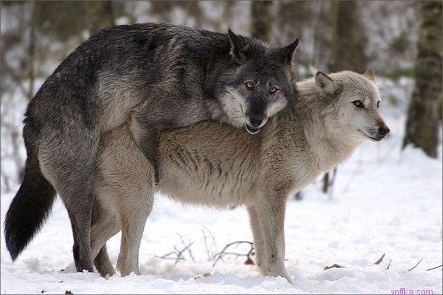 cекс с животными: