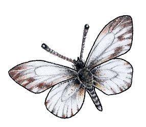 Раскраски группа бабочек