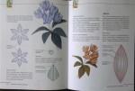 цветы из кожи инструкция.